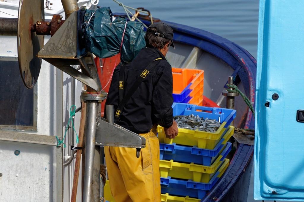 retour de pêche débarquement des caisses d'anchois ! Dsc_0416