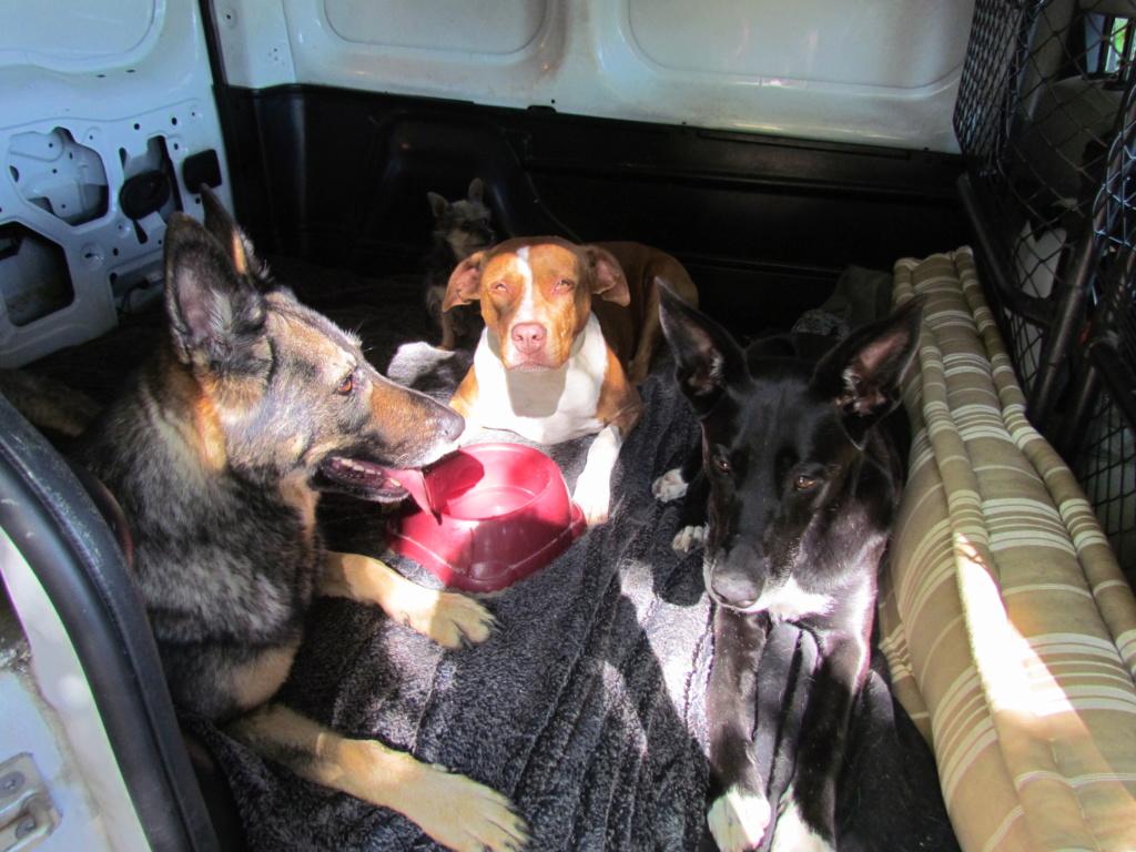 Camions/voitures aménagé(e)s: voyager avec nos chiens - Page 10 Img_6810
