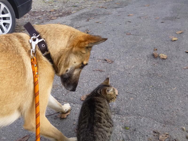 Cohabitation chien et chats - Page 19 P1040010