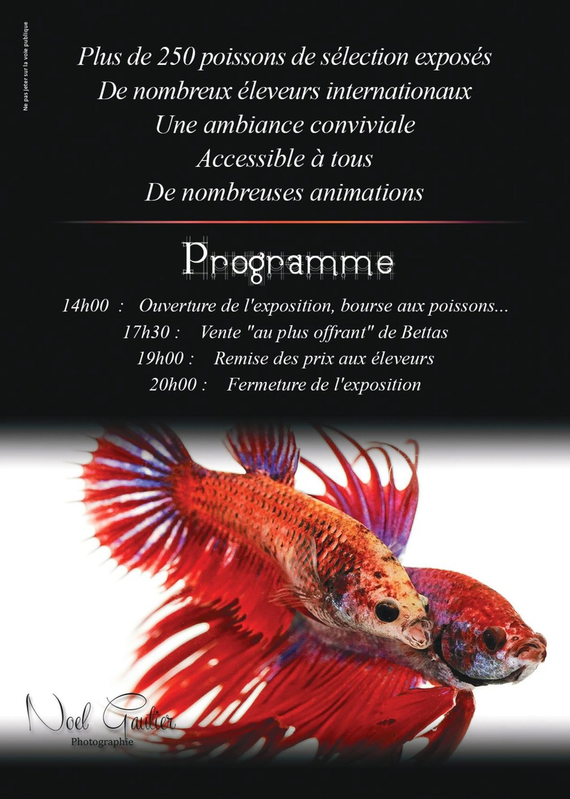 Auvergne Betta Club 2017!!! 000110
