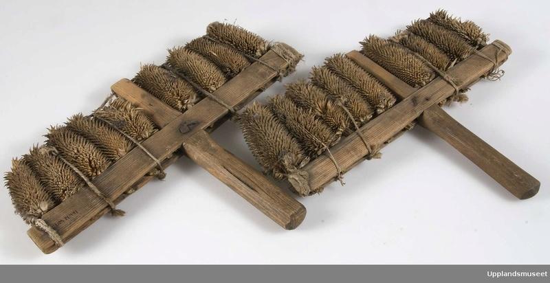 La cardère à lainer Cardyr10