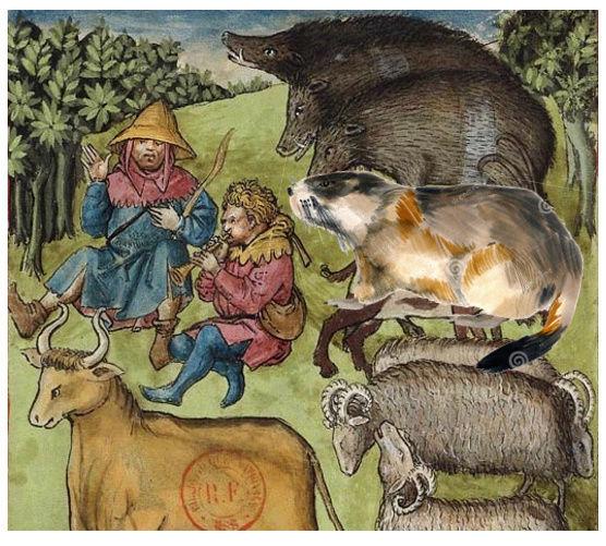 Connaissaient-ils la marmotte au XVe ? Tacuin10