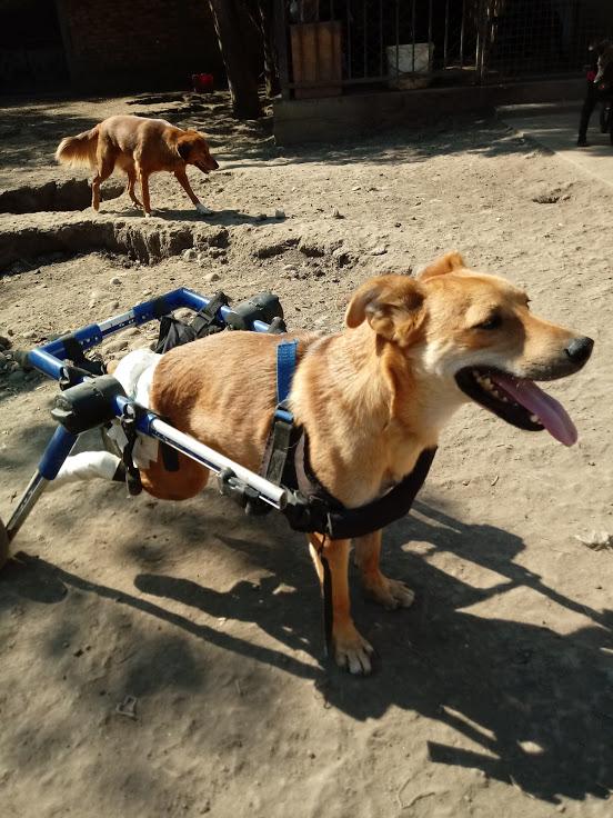 MIKI, M-X, né 2014, handicapé (SERBIE/Pension GORDANA) En FA chez Aurore W. (Depart67) 20171030