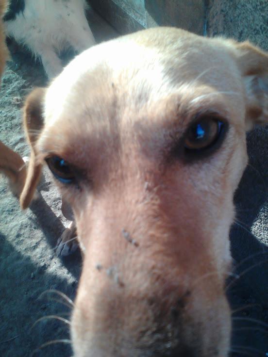 RIKI, M-X, né 2013, handicapé  (SERBIE/Pension GORDANA) PARRAINE/ Réservé adoption Naomi.C (dept42) Lenov108