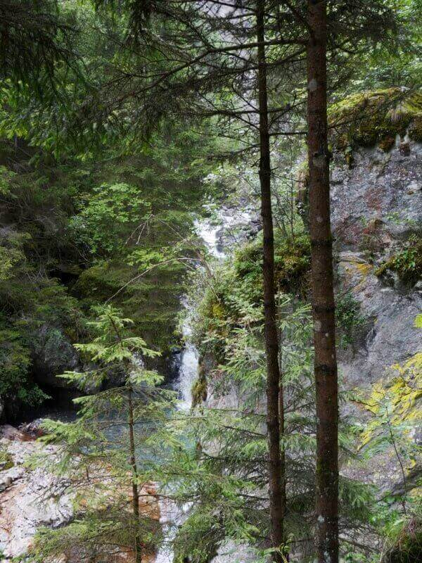 Vallée de Chamonix - Les gorges de la Diozaz (74) Gdd_410