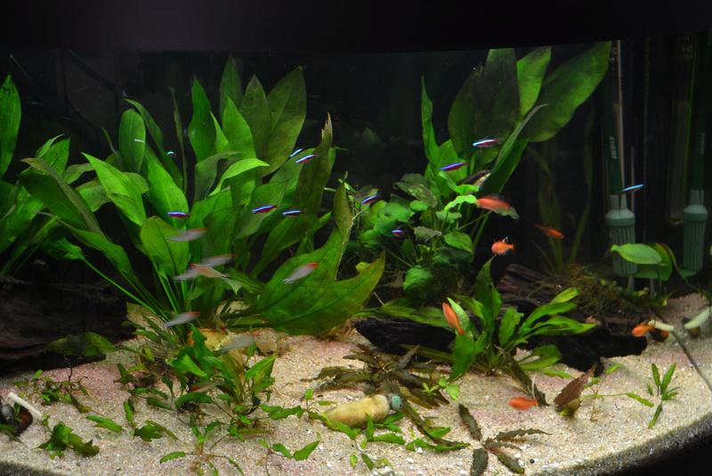 Débutante besoin d'aide pour projet aquarium 130 l 14mars10