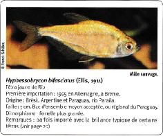 Quel est ce poisson ?? Captu168