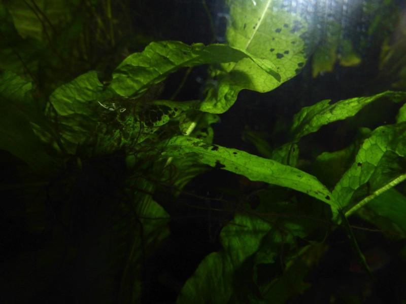 trou dans mes plantes  P1040811