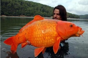 Quel est ce poisson ?? Poisso10