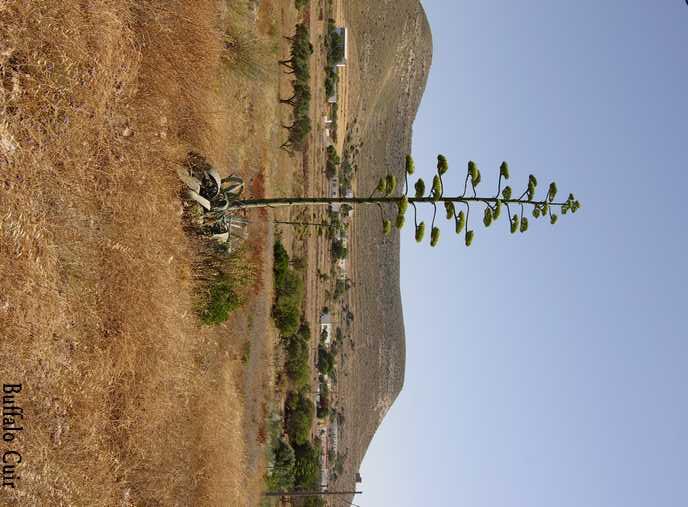 desert de Tabernas , que sont devenu les lieux de tournage Almeri40