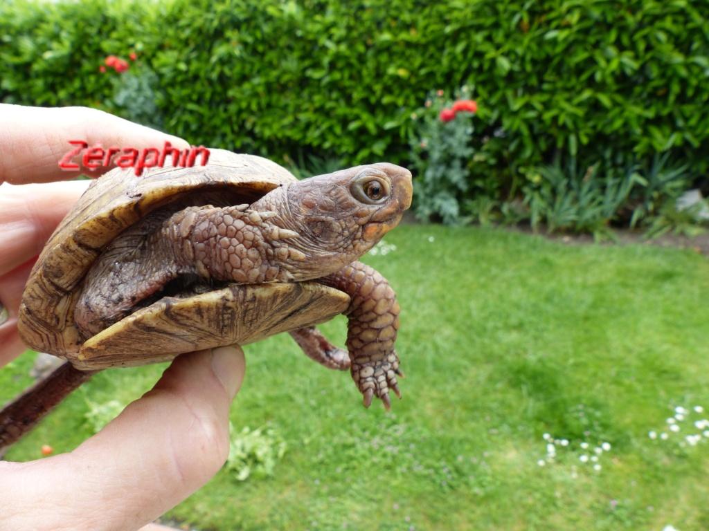 Conseils à lire avant de faire l'acquisition d'une tortue .. 06_jui11
