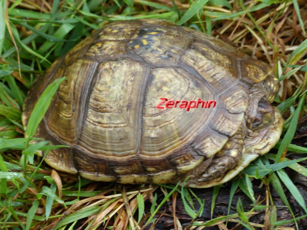 Conseils à lire avant de faire l'acquisition d'une tortue .. 12_aoz12