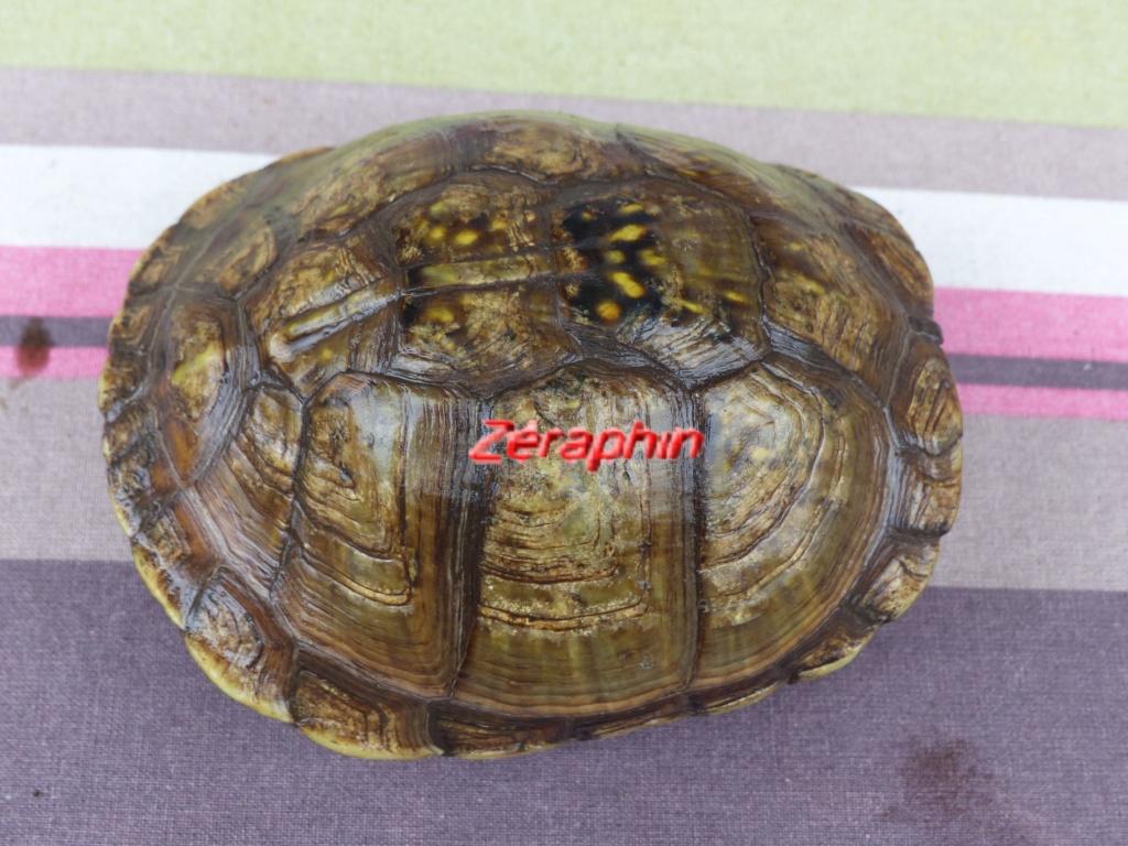Conseils à lire avant de faire l'acquisition d'une tortue .. 12_aoz13
