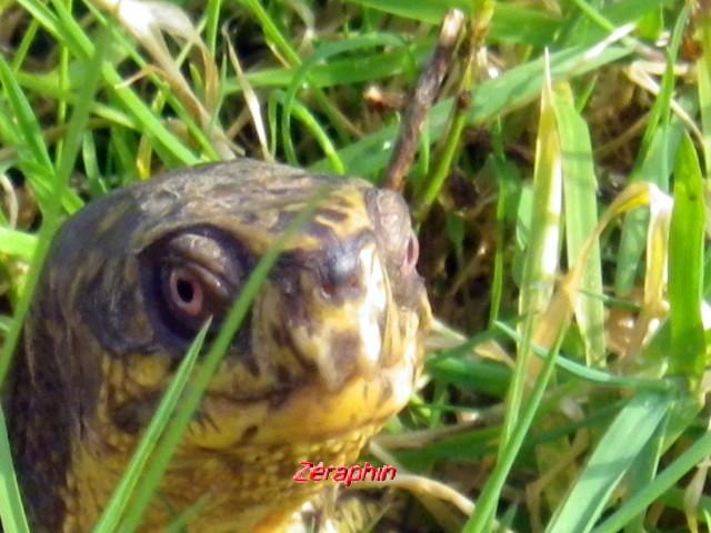 Conseils à lire avant de faire l'acquisition d'une tortue .. 18_mar10
