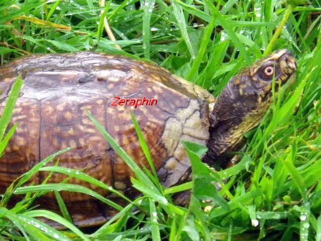Conseils à lire avant de faire l'acquisition d'une tortue .. 27aozt10