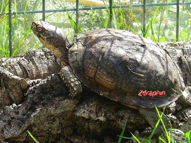 Conseils à lire avant de faire l'acquisition d'une tortue .. 27aozt11