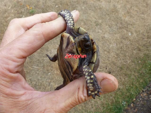 Conseils à lire avant de faire l'acquisition d'une tortue .. 28_jui17