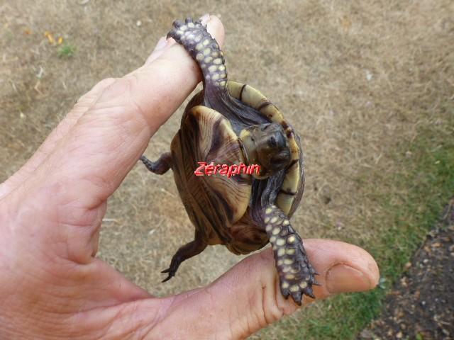 Conseils à lire avant de faire l'acquisition d'une tortue .. 28_jui18