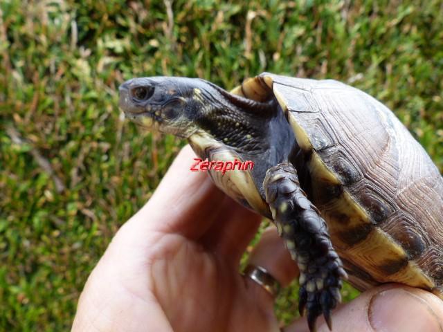 Conseils à lire avant de faire l'acquisition d'une tortue .. 28_jui19