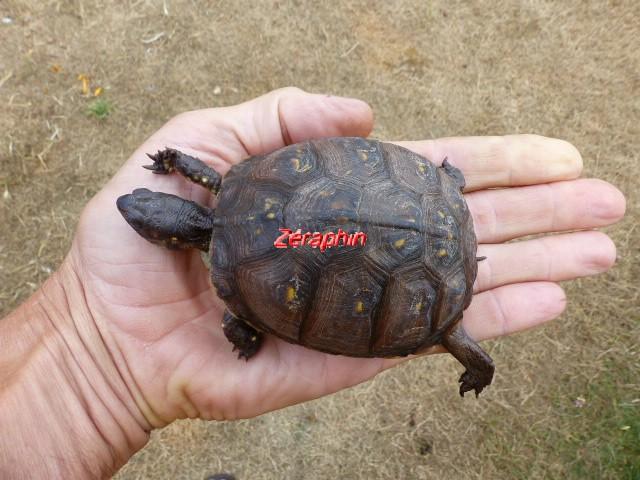 Conseils à lire avant de faire l'acquisition d'une tortue .. 28_jui20