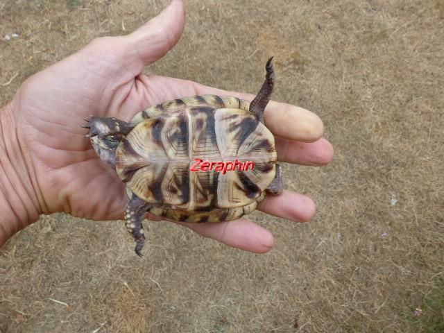 Conseils à lire avant de faire l'acquisition d'une tortue .. 28_jui21
