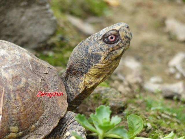 Conseils à lire avant de faire l'acquisition d'une tortue .. 30_jui10