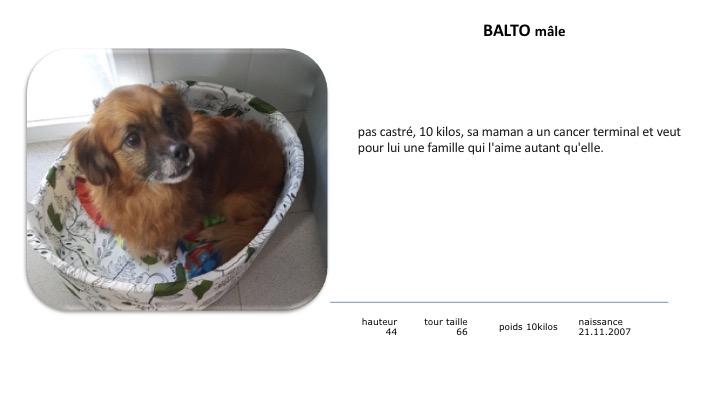 BALTO - x 11 ans - Asso Alerte Sos - Ceuta (Espagne) Balto10