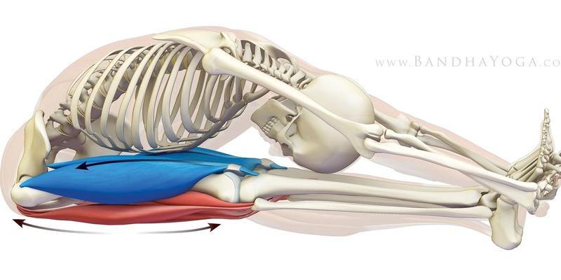 Gymnastique aux agrés (et accessoirement musculation/exercices poids du corps + souplesse) Fermet10