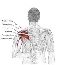 Gymnastique aux agrés (et accessoirement musculation/exercices poids du corps + souplesse) Jpeg_i10