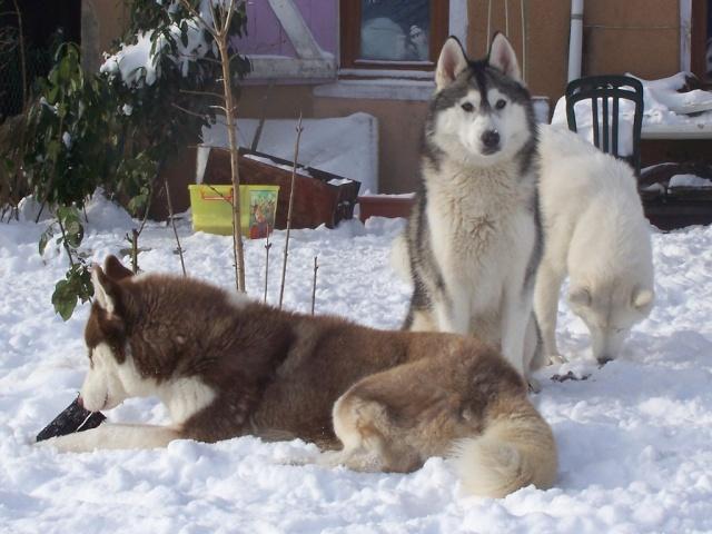 Dans la neige 12-01-10