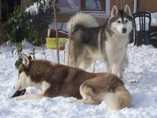 Dans la neige 12-01-11