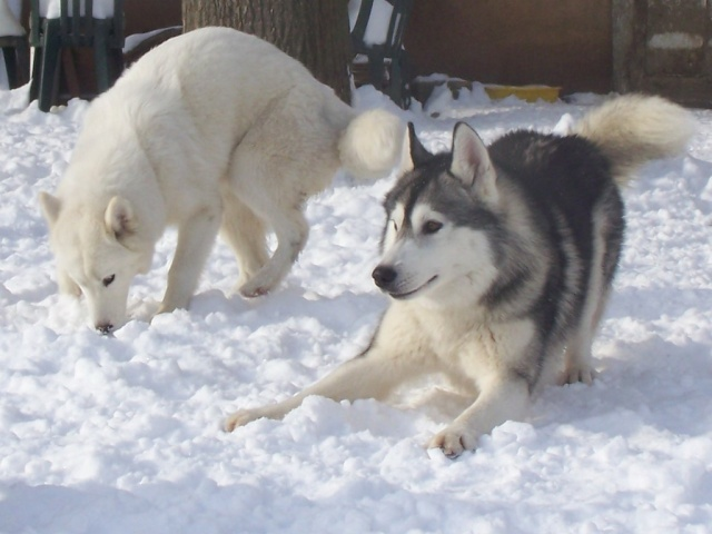 Dans la neige 12-01-14