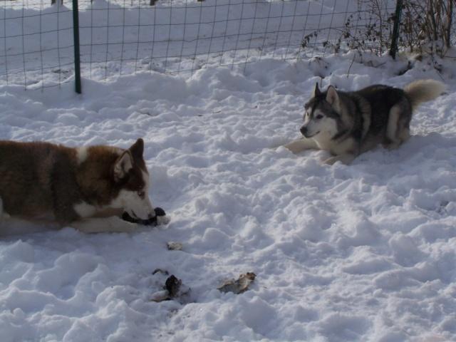 Dans la neige 12-01-15