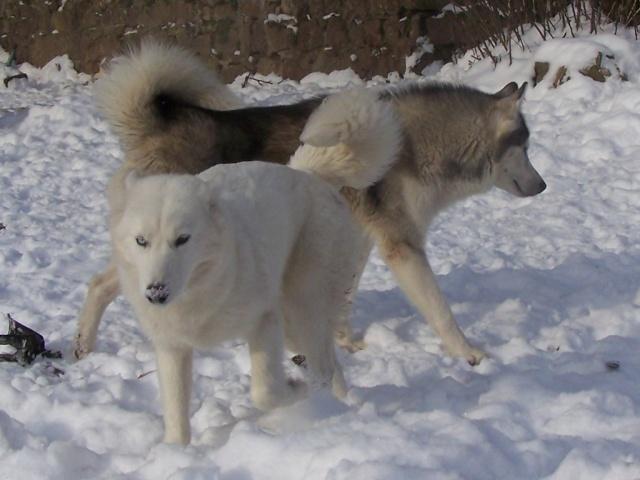 Dans la neige 12-01-16