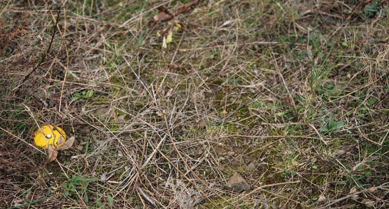 Ophrys tenthredinifera à St Paul de Fenouillet Dsc_4312