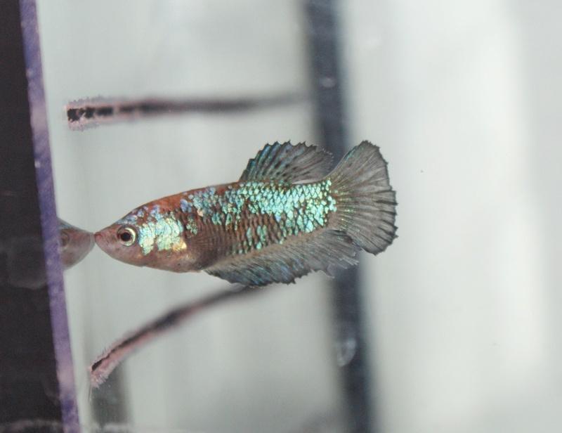 Soucis reproduction Dsc04517
