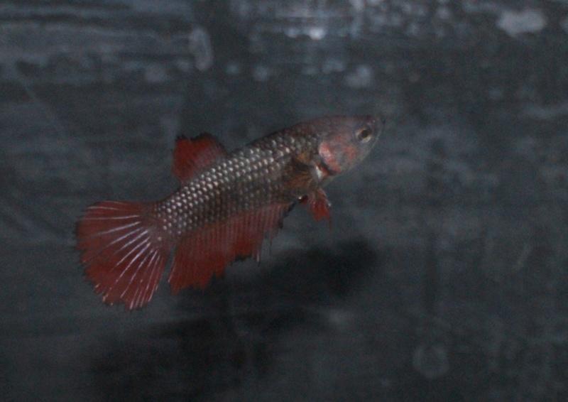 Soucis reproduction Dsc04518