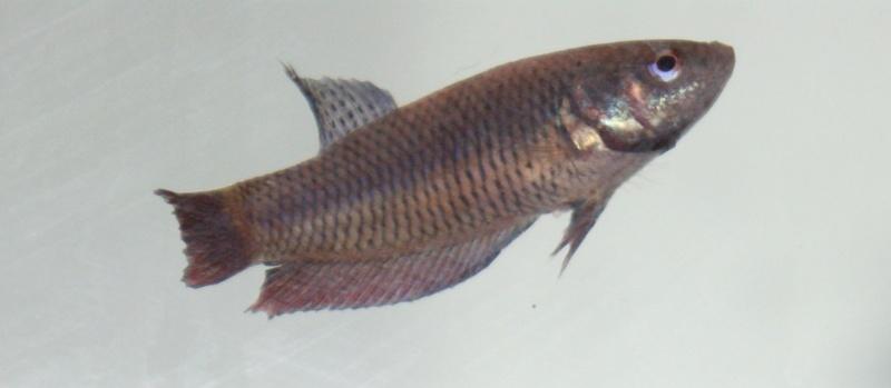 Soucis reproduction Dsc04522