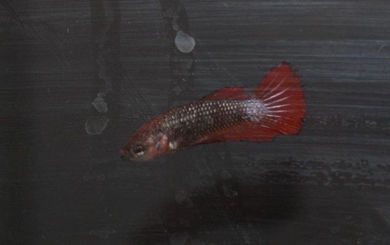 Soucis reproduction Dsc04523