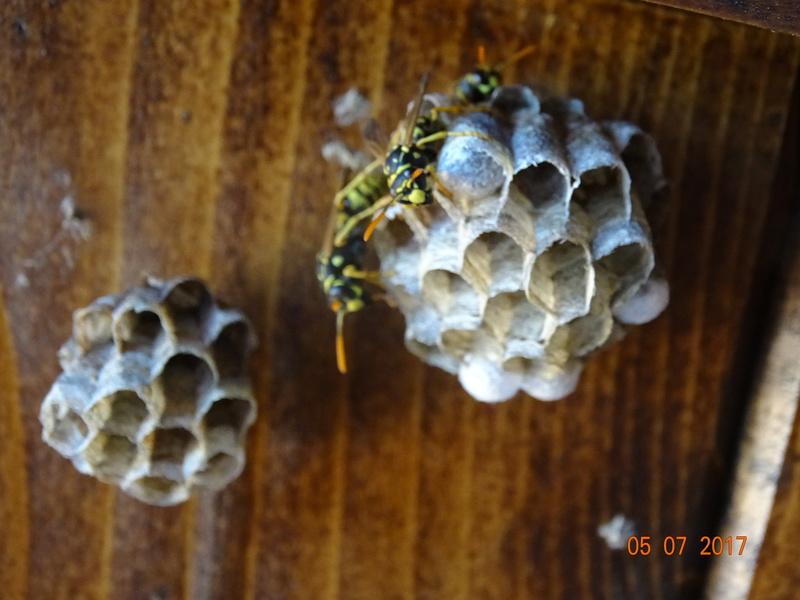Mes modestes nids de Haute Provence Dsc05410