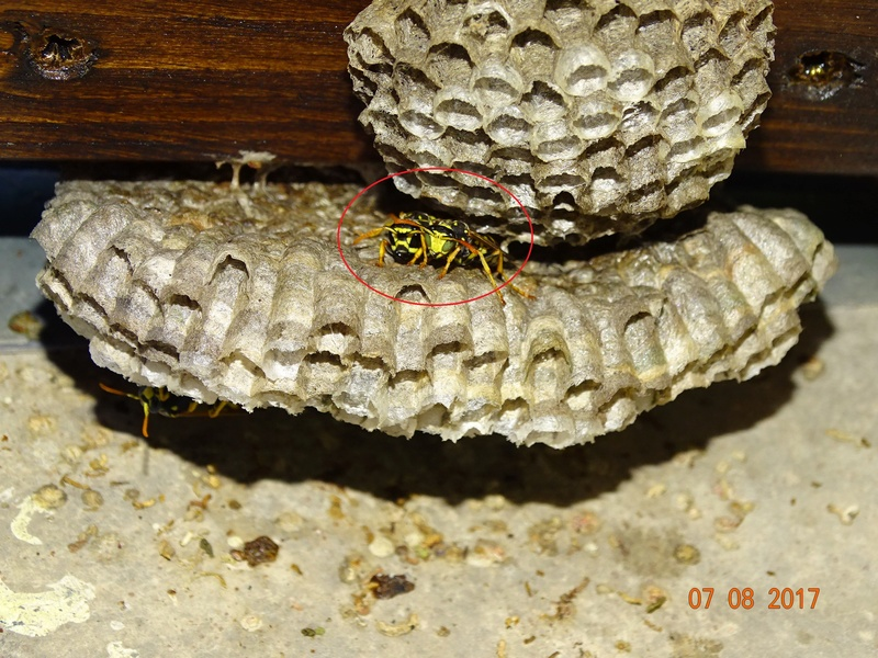 Mes modestes nids de Haute Provence Dsc06310