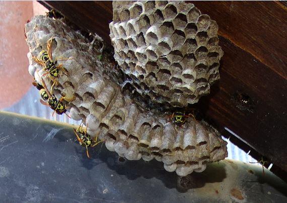Mes modestes nids de Haute Provence Guypie10