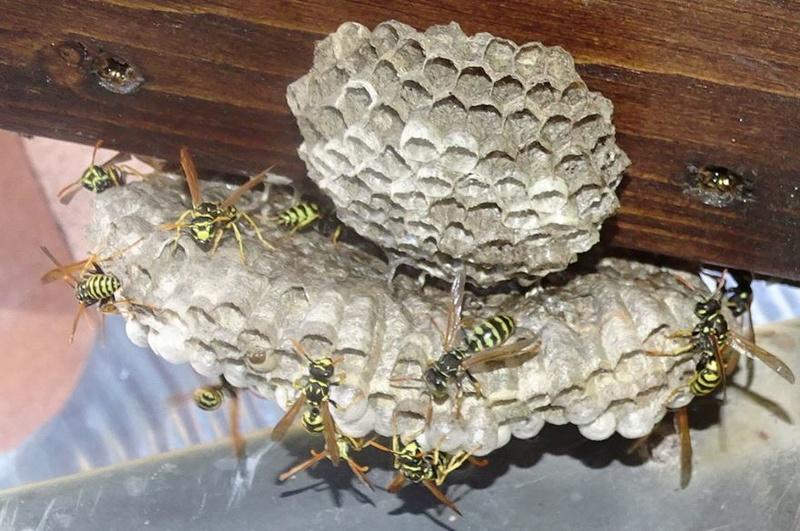 Mes modestes nids de Haute Provence Guypie12