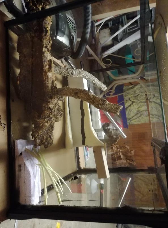[Exo Terra] Mon second exoterra en paludarium 60X45x60 pour Bombina orientalis Img_2027