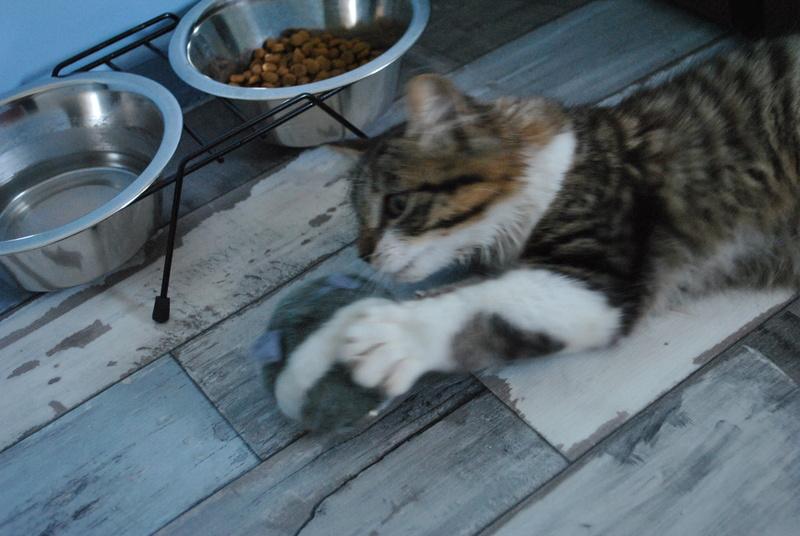 JAMES, rebaptisé TWIX, chaton né en juin 2017 Dsc_0057