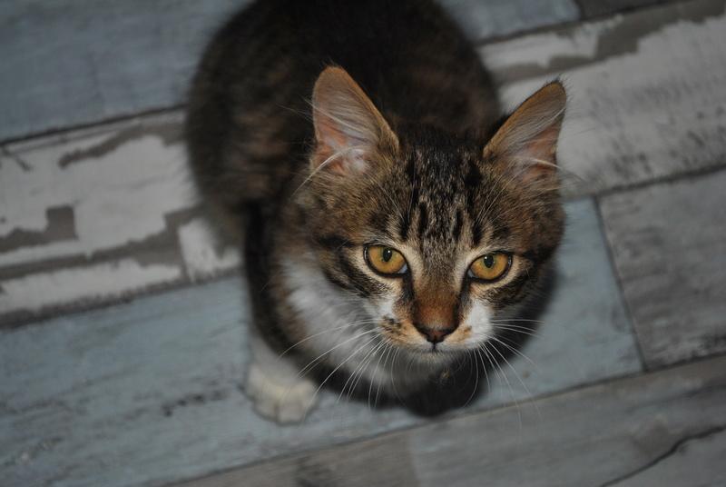 JAMES, rebaptisé TWIX, chaton né en juin 2017 Dsc_0058