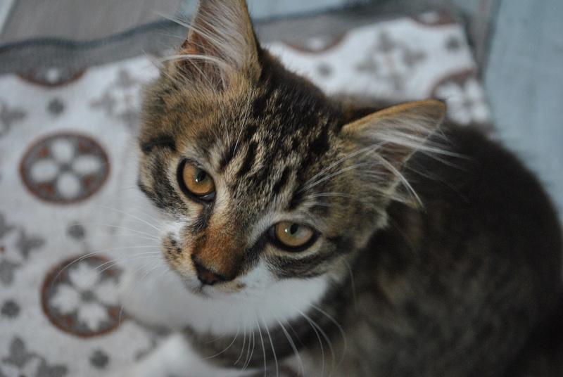 JAMES, rebaptisé TWIX, chaton né en juin 2017 Dsc_0060