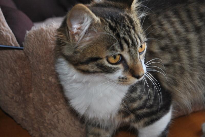 JAMES, rebaptisé TWIX, chaton né en juin 2017 Dsc_0062