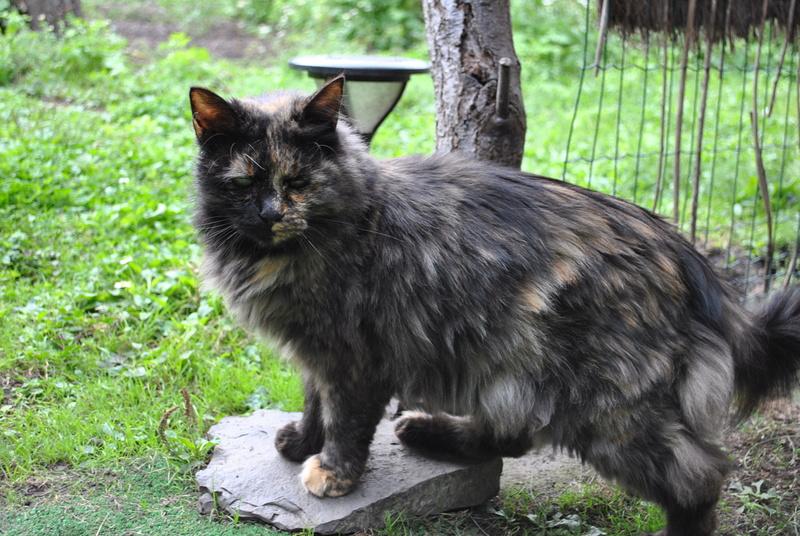 Kitty Cat, née le 1er août 2010 STATUT :CHAT LIBRE - Page 4 Dsc_0075