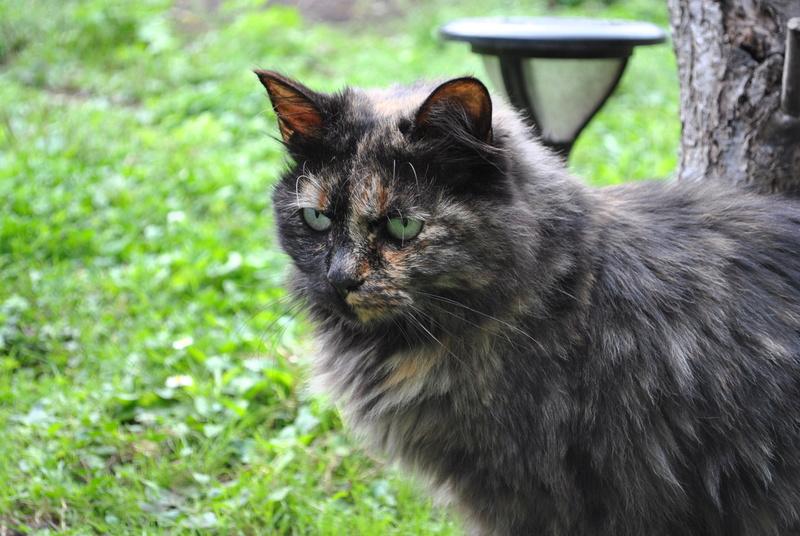 Kitty Cat, née le 1er août 2010 STATUT :CHAT LIBRE - Page 4 Dsc_0076